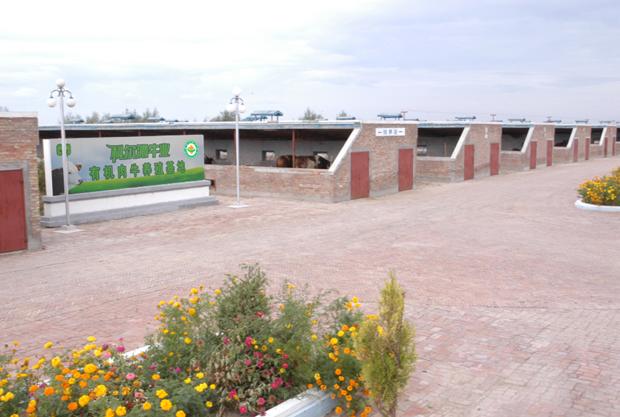科尔沁牛业养殖基地