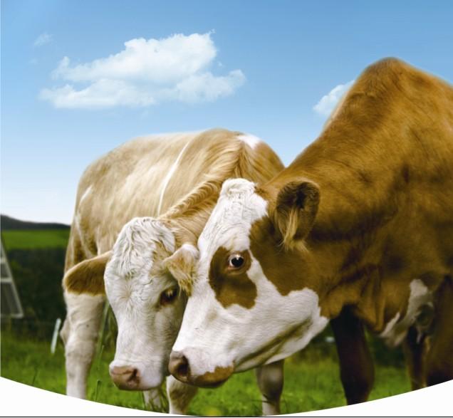 牛魔王终于放慢了脚步,科尔沁牛业让牛肉不再是美食的奢侈品