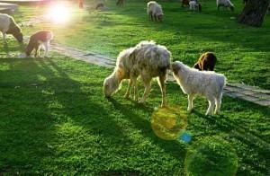 健全基层食品安全大力发展牛羊产业